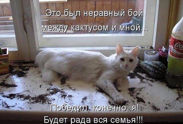 коты и цветы - Страница 2 FHWOhZEZKtw