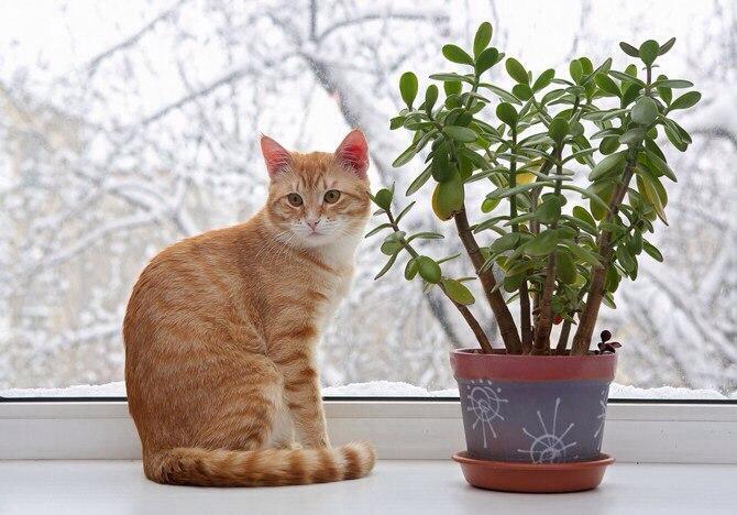 коты и цветы - Страница 2 CjDjpXAw_48