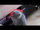 Смешные кошки приколы про кошек и котов 2017 #39 (Коты вредители Очень смешной выпуск)