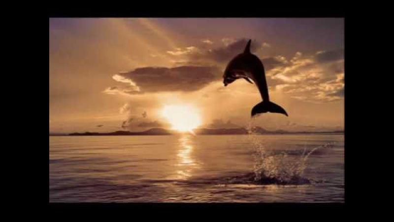 Дельфины. Дидюля. Музыка волшебства