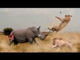 Носорог дает пизды и унижает малолеток