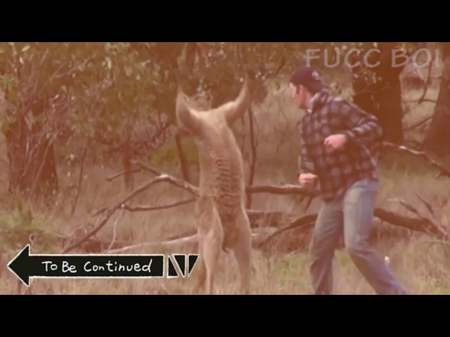 Man Punches Kangaroo (To Be Continued)