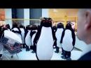 Пингвины в отжигают в супермаркете