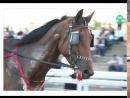 Мучение самых прекрасных созданий Лошади