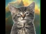 котята поют няшно😁😄