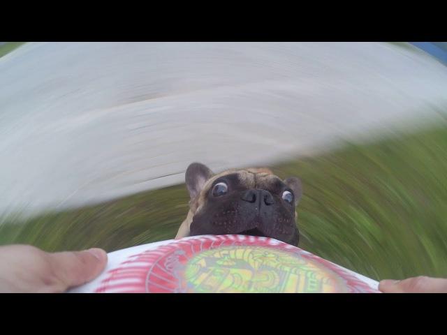 Frisbee gp2