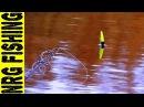 Рыбалка на КАРАСЯ осенью Карась на поплавочную удочку