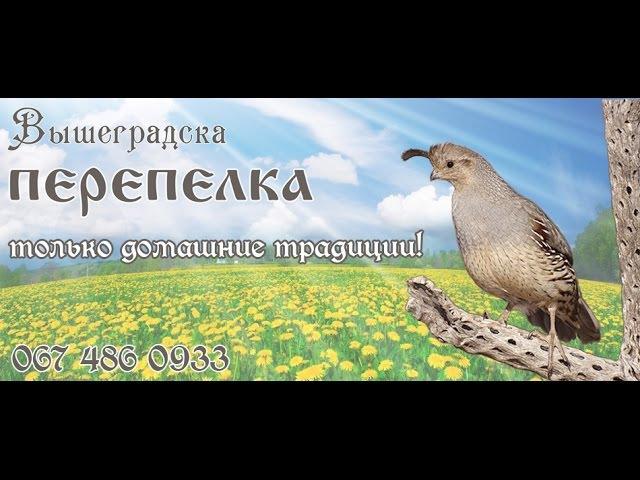 Разведение перепелов: уход, содержание и кормление перепелок, - v-perepelka.com.ua