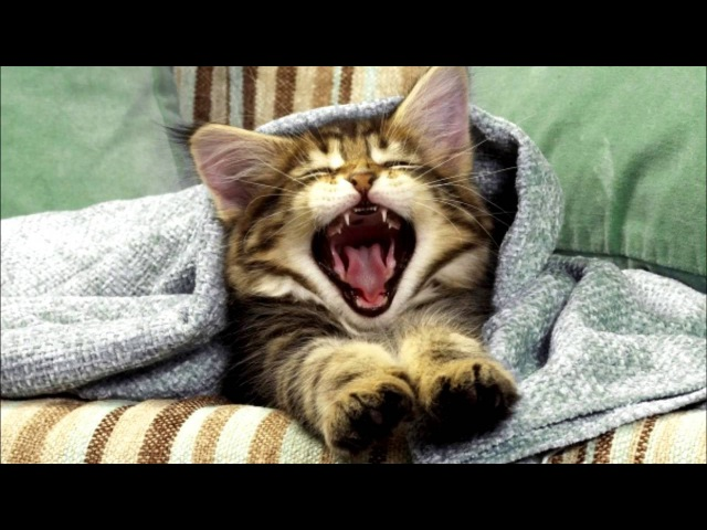 Віршик про котика і Павлика - розвиваюче відео-вірші для дітей українською мовою