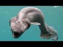 У берегов Крыма карадагский змей жрёт людей и лакомится дельфинами.