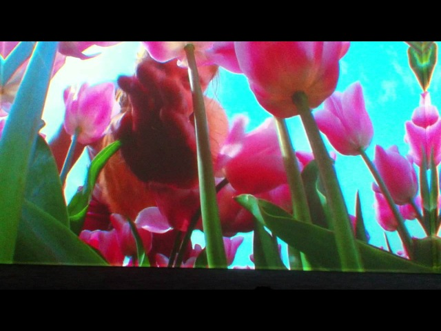 Pipilotti Rist Lobe of the Lung Part 2