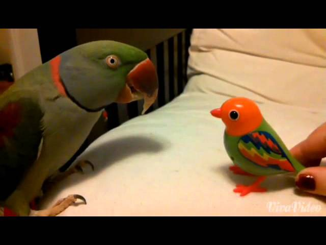 Real Bird's Reaction to Digibirds