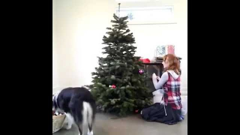 Los perros NO odian la navidad