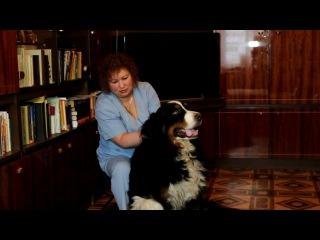 Остеопатия для животных (собак) в Санкт-Петербурге (Питер)