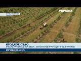Село мечты Село в Винницкой области получило второе дыхание благодаря ягодному бизнесу