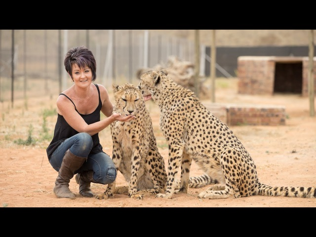 Petite Woman Is Best Friends With Big Cats   BEAST BUDDIES