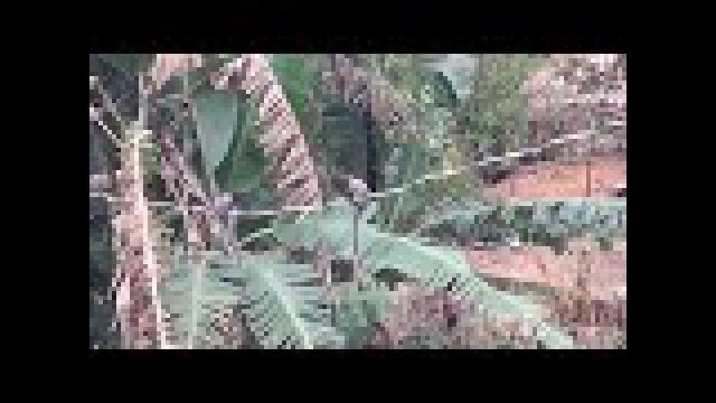 Paulo Sérgio Talarico Atelier Floresta Micos no Fio JF Brasil IMG 2424 92 7 MB 11h54 13ago17