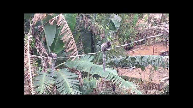 Paulo Sérgio Talarico Atelier Floresta Micos no Fio JF Brasil IMG 2425 25 8 MB 11h53 13ago17