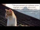 ГОРОД КОШЕК – трейлер (в кино с 30 ноября)