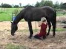 Cranio-Sacrale-Therapie mit Andrea Mais bei einem asthmakranken Pferd
