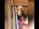 Мимоза, Наоми и Харт щеночки