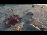 Ватага ТВ _ Спанч БоБ на пляже