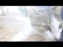 Видео про кота из Чернобыля