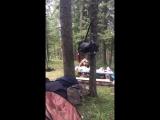 Медведь зашёл перекусить. (VHS Video)
