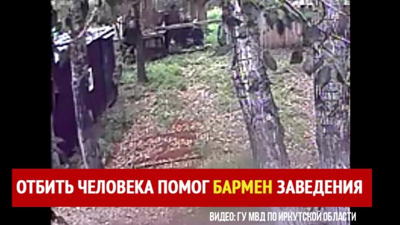 Медведь оторвал руку человеку. Август 2017. Шелехово