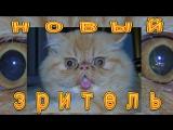 Новый зритель на канале - кошка Лила!