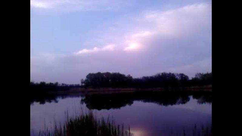 Спів птахів на ставку увечері, кування зозулі в гаю за ставком, Україна MOV 0013