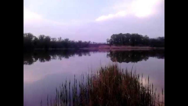 Спів птахів на ставку гарного вечора, зозуля кує за ставком у гаю MOV 0011
