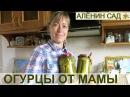 ОГУРЧИКИ маринованные от мамочки Самый простой проверенный способ маринования огурцов