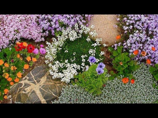 Лучшие многолетние растения для альпинария