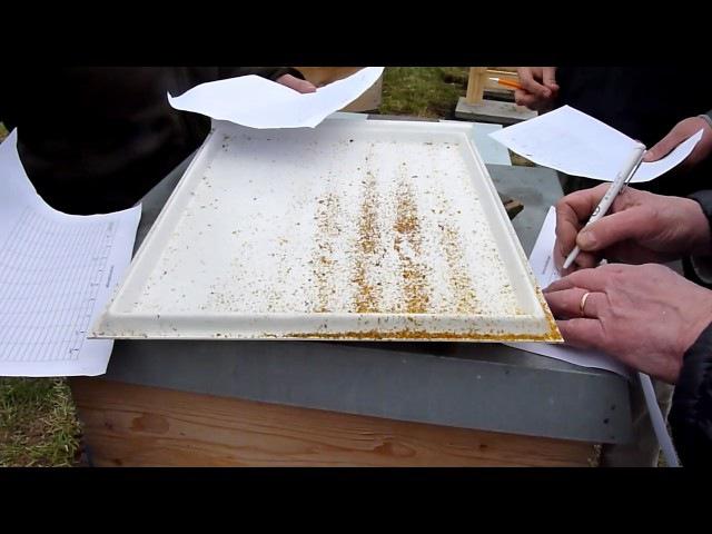 BD Varroa-Frühjahrskontrolle, Kontrolle Raum, Futter, Bienengesundheit etc. - 19. 3. 2016