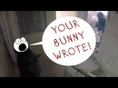 Убит Убит Мертвый Мертвый Your Bunny Wrote