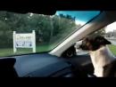 Песик радуется прибытию в парк для собак