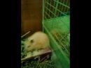 Хомячок Фрося и Кролик Груня