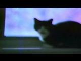 cat soup - thresh