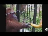 Смешная озвучка животных №2 (online-video-cutter.com)