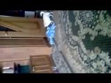 Моя собака после ванной