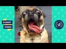 TRY NOT TO LAUGH or GRIN - Funny Animals Vines Compilation 2017 Funny Vines