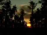 8 Часов Релакса!.Для сна. Звуки вечернего леса. Sounds of Nature