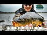 Рыбалка в Калининграде //// Карп на поплавок в апреле //// KÖNIGFISHING.