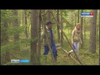 Без грибов возвращаются из леса в Карелии