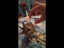 Моя любимая кошечка Соня