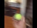 Собачка прыгает за мячом
