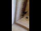 Ангелина. Играю с Бэлкином. Как собаки реагируют на агрессию и ласку.