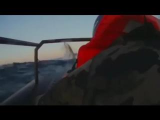 Белый акула