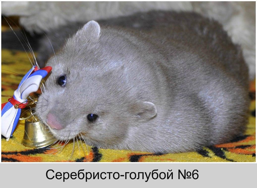 Серебристо-голубой